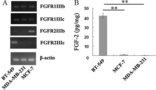 Endogenous expressions of FGFRs and FGF-2 in BT-549, MCF-7, and MDA-MB-231 cells.