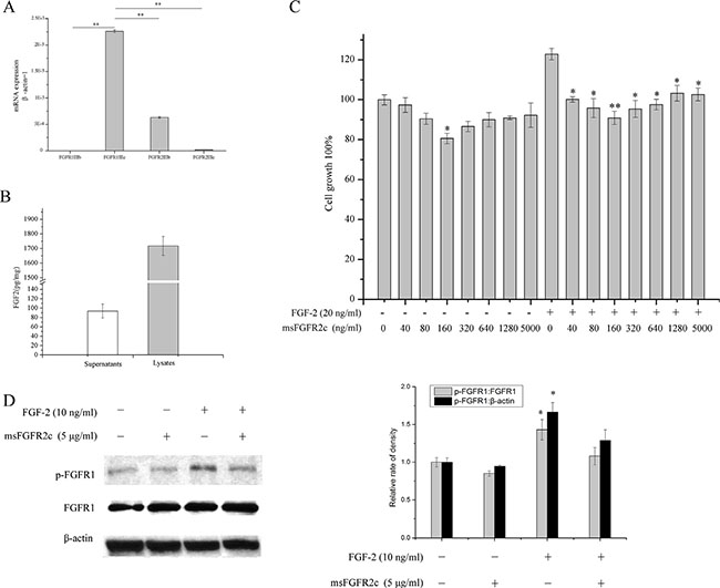 Effects of msFGFR2c on proliferation and FGFR1 phosphorylation in NCI-H1299 cells.