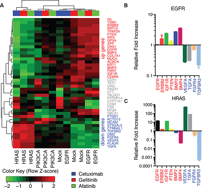 AP-2alpha gene expression signature in HaCaT cells.