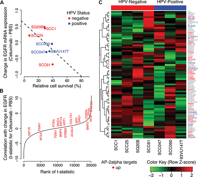 AP-2alpha gene expression signature in HNSCC cell lines.