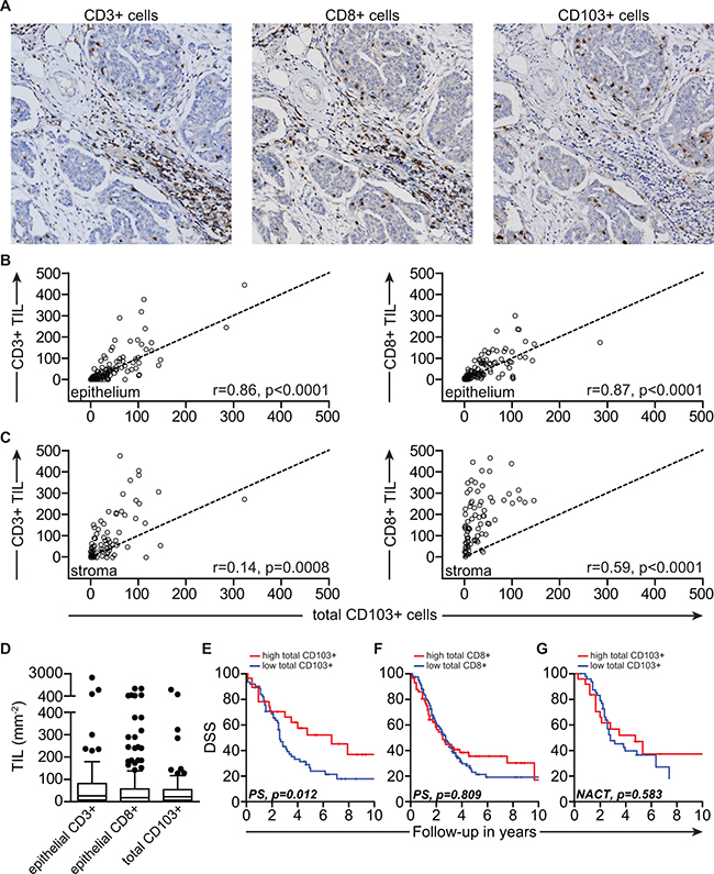 CD103 defines intraepithelial CD8+ TIL with prognostic benefit in HGSC patients.
