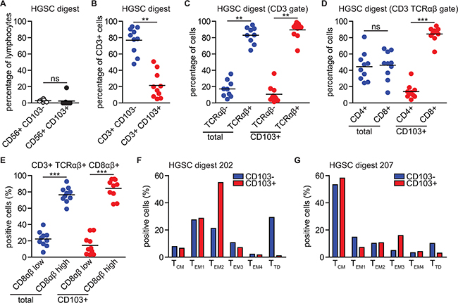 CD103+ TIL are almost exclusively classical CD3+ CD56- TCRαβ+ CD8αβ+ CD4- T cells with heterogeneous differentiation status.
