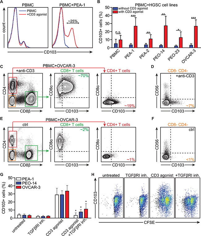 Activation in the presence of HGSC cell lines induces CD103 on peripheral blood CD8+ T cells through combined TCR and TGFβR1-signaling.