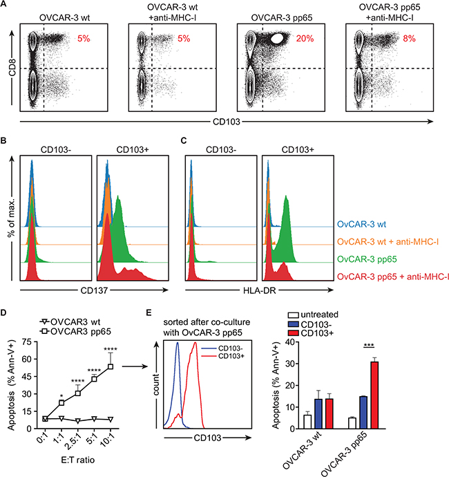 Activation in the presence of HGSC cell lines induces CD103 on CMV pp65-reactive CD8+ tumor-lytic T cells.