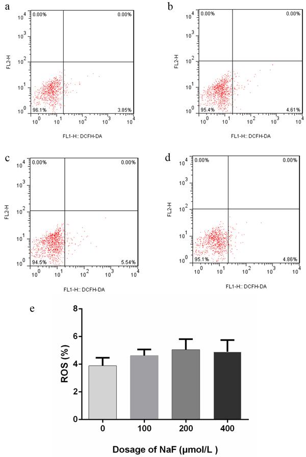 Effect of NaF on ROS generation at 48 h.
