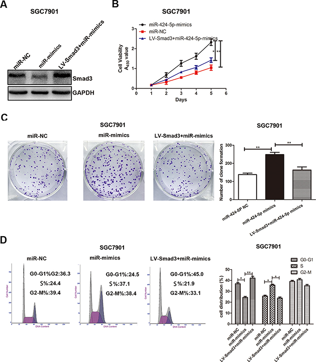 Over-expression of Smad3 could partially reverse the effects of miR-424-5p on GC cell proliferation.