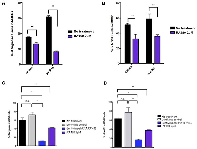 Arginase and iNOS levels in MDSCs isolated from spleen and tumor microenvironment following RA190 treatment or RPN13 knock down in vitro.