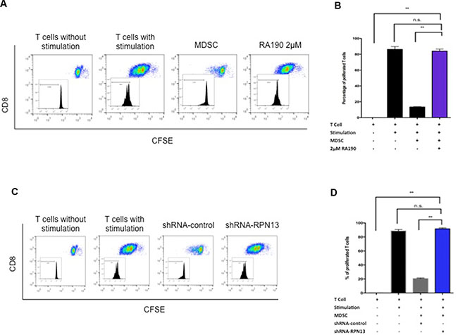 T cell proliferation after co-culturing with MDSCs treated with RA190 or RPN13 knock down in vitro.
