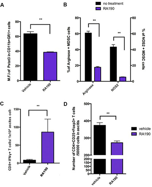 Impact of RA190 treatment upon P-Stat3, arginase and iNOS expression levels in MDSCs, and T cell populations in the tumor microenvironment.