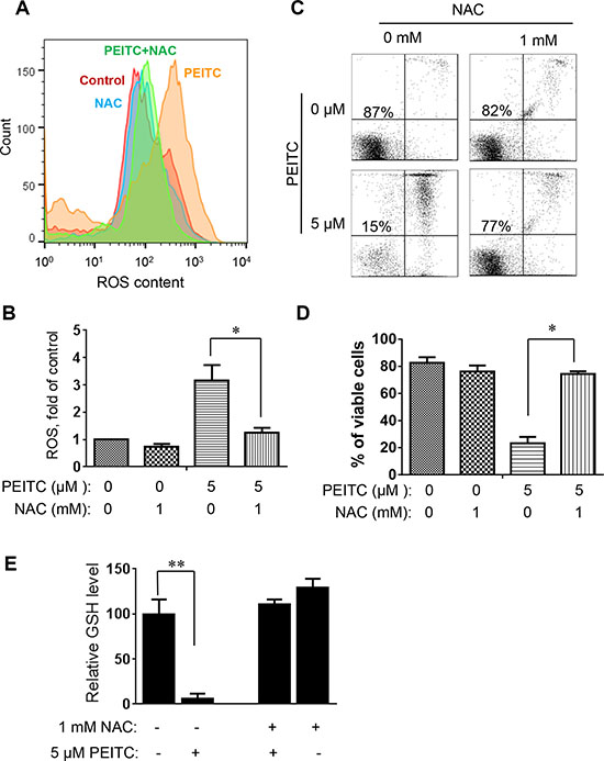 Effect of NAC on PEITC-induced ROS accumulation and cell death in primary CLL cells with 17p-deletion.