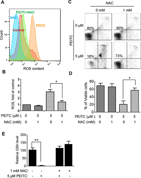 Effect of NAC on PEITC-induced ROS accumulation and cell death in mouse leukemia cells isolated from the spleen of mice with TCL1-Tg:p53-/- genotype.