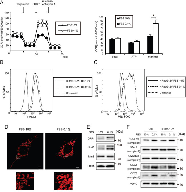 Serum depletion increases the mitochondrial respiratory function of HRASG12V-expressing MEF cells.