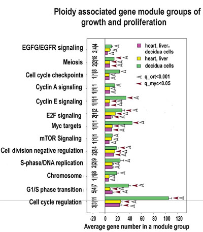 Proliferation and growth related modules significantly enriched in ploidy-regulated genes.