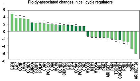 Ploidy-associated changes in the activity of regulators related to cell cycle.