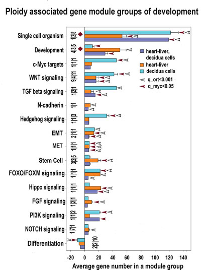 Development and stemness modules significantly enriched for ploidy-regulated genes from all three c-Myc interacting gene lists (for heart-liver, placenta and heart-liver-placenta).
