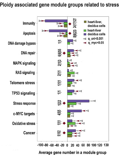 Stress response and transformation related modules significantly enriched in ploidy-regulated genes from all three c-Myc interacting gene lists in all three comparisons (for heart-liver, placenta and heart-liver-placenta).