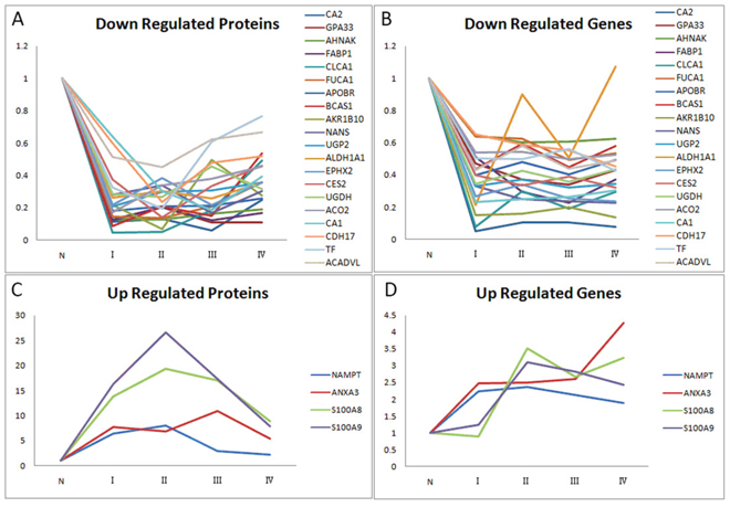 Relative ratios of 24 significantly differential proteins/genes amongst the 245 proteins/genes between paired CRC and adjacent normal mucosa independent of cancer stage.