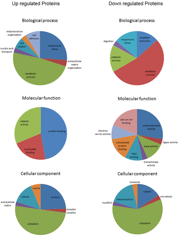 Gene ontology enrichment analyses for biological process, molecular function and cellular component of the 245 differential proteins (enrichment score>1.3).