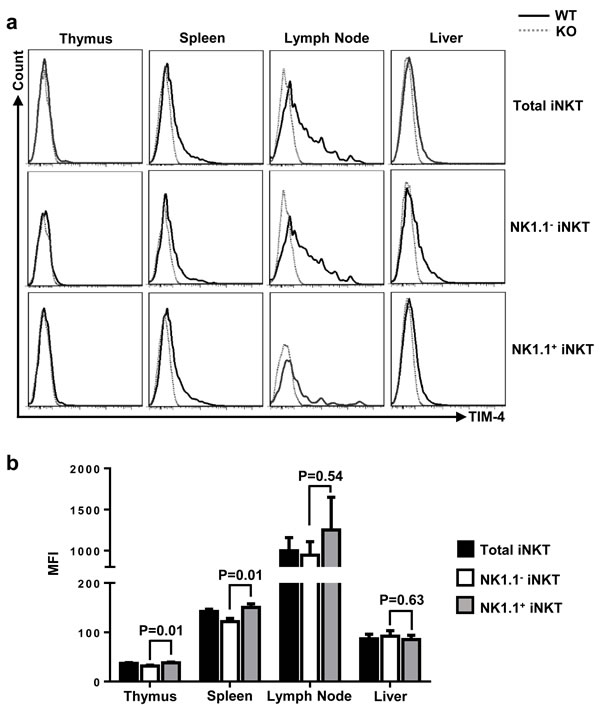 TIM-4 expressions in iNKT cells.