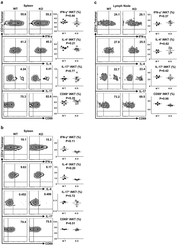 Normal iNKT cell function in TIM-4 KO mice.