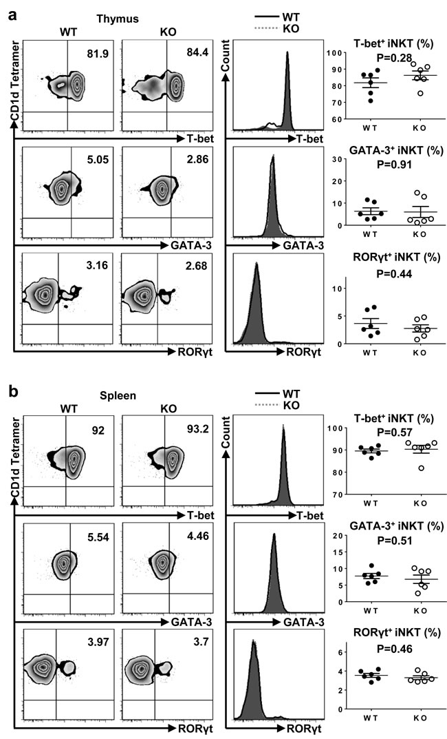 Loss of TIM-4 does not affect the polarization of iNKT cell sublineages.
