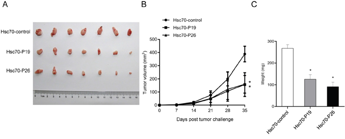 Effects of treatment with Hsc70-peptide fusion protein in transplantable lung tumor model of mouse.