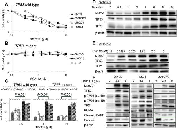 Cell viability and activation of TP53 target proteins in clear cell carcinomas treated with RG7112.