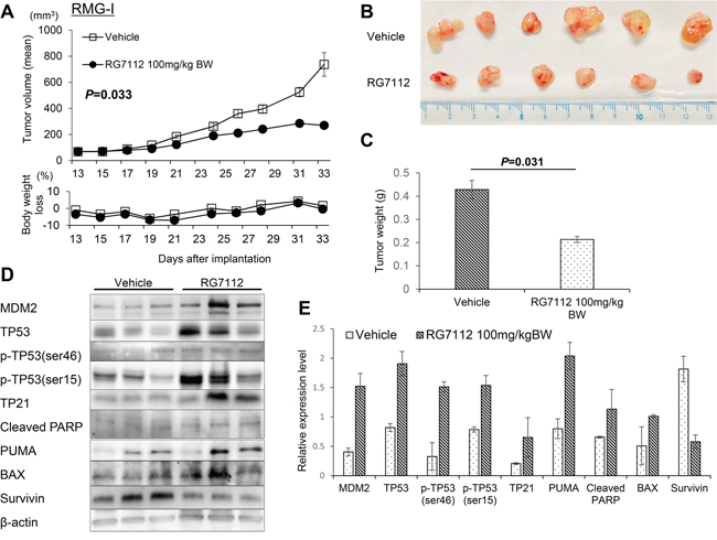 In vivo evaluation of RG7112 efficacy using xenografted RMG-I cells.