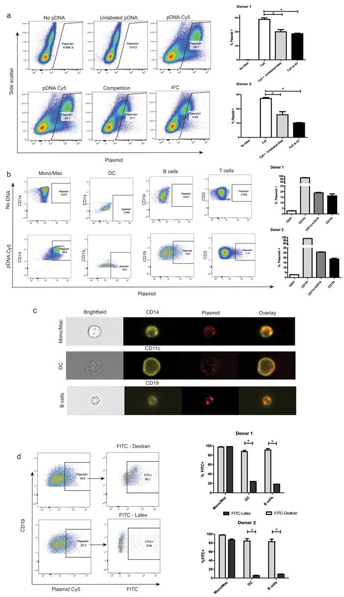 Primary human peripheral blood APCs exhibit spontaneous uptake of plasmid DNA.