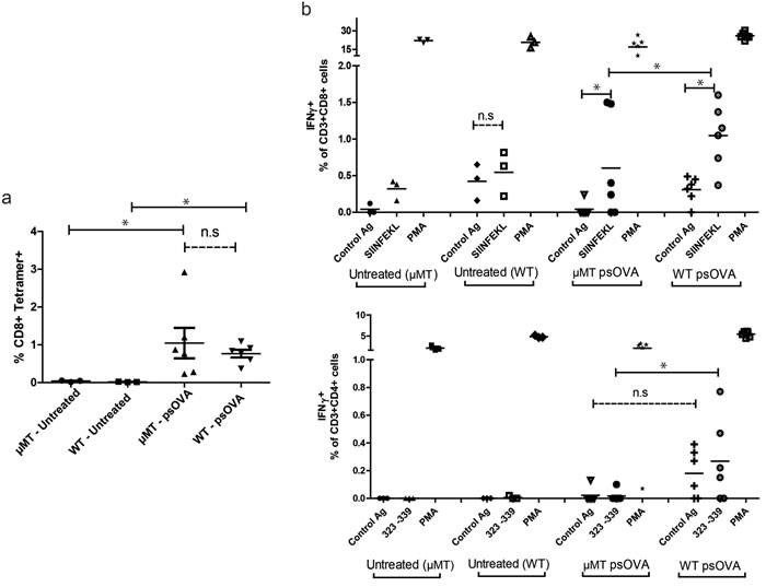 Immunization of B cell-deficient mice results in equivalent frequencies of antigen-specific CD8 T cells as measured by tetramer staining, but lower antigen-specific IFNγ secretion by CD4 and CD8 T cells.
