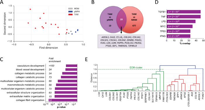 Identification of a transcriptional ECM signature of genes upregulated in TAMs versus normal macrophages.