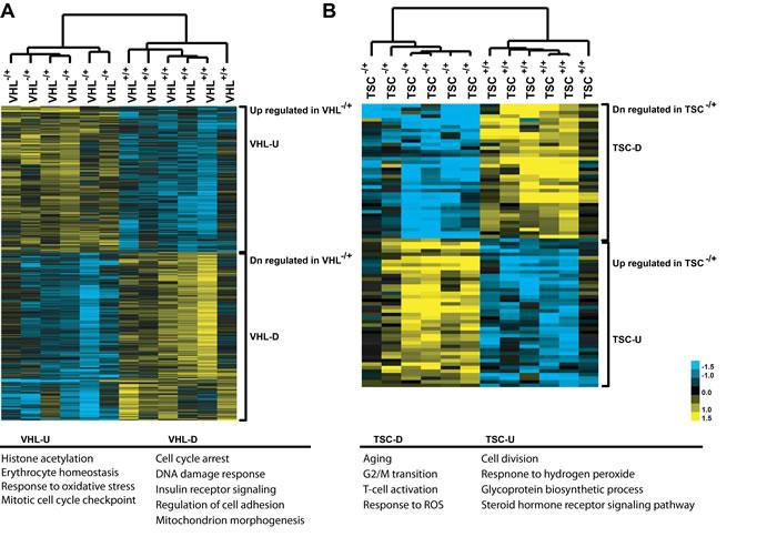 Gene expression patterns, as heatmap, between