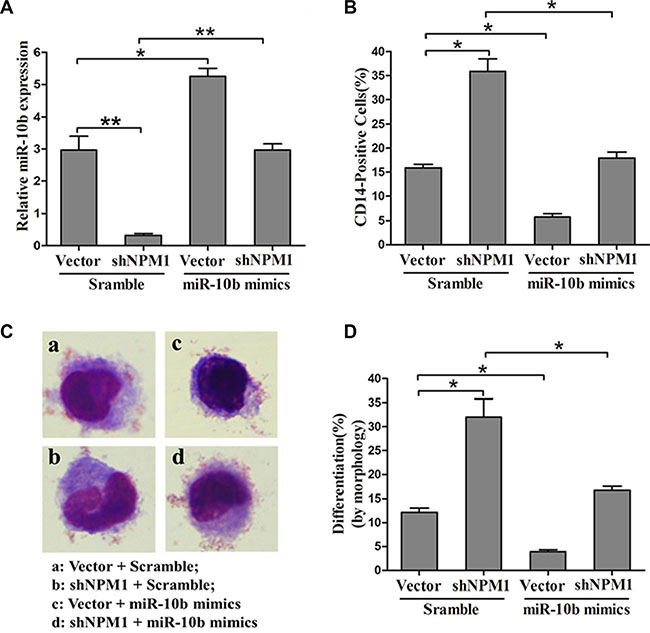 MiR-10b is involved in NPM1-mA-mediated myeloid differentiation of leukemia cells.
