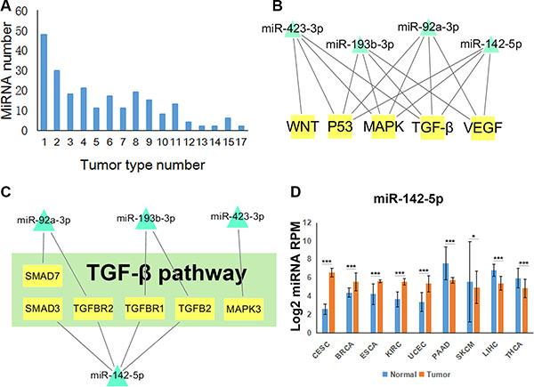 Tumor-related miRNA regulatory pathways.