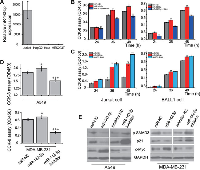 miR-142-5p promotes the proliferation of tumor cells by regulating TGF-β pathway.