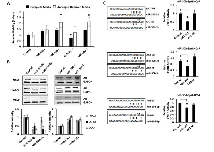 miR-30b-3p and miR-30d-5p directly regulate AR protein expression and PCa cell growth.