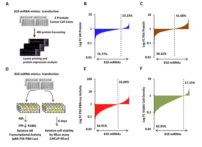 High-throughput miRNA mimic library screen for miRNAs that modulate the AR Signaling Axis.