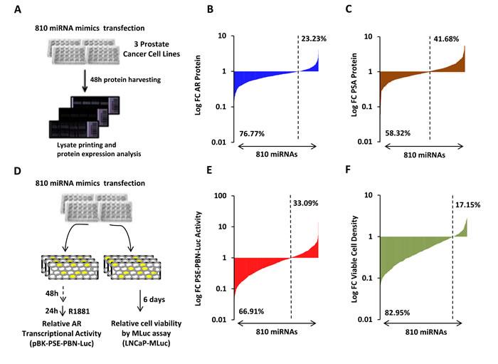 High-throughput miRNA mimic library screen for miRNAs that modulate the AR Signaling Axis.