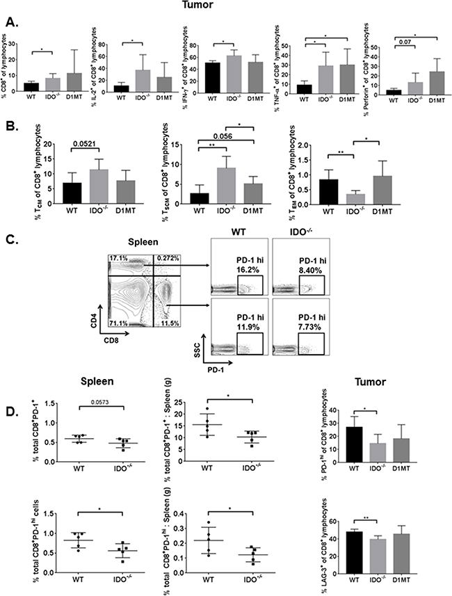 Tumor-bearing IDO-/- T lymphocytes are more polyfunctional, have enhanced memory, and express fewer T cell surface exhaustion markers.