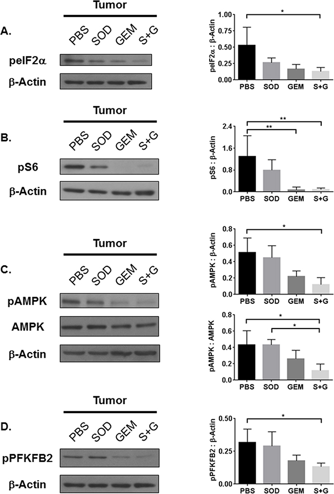 Combination treatment reduces tumor tissue GCN2, mTOR, and AMPK activation.