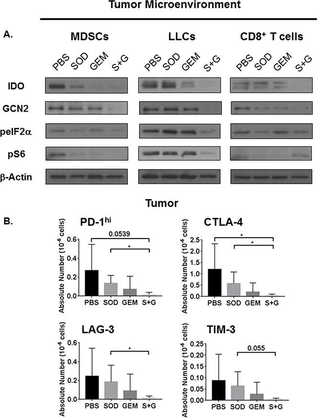Combination treatment inhibits IDO and mTOR activation in MDSCs and LLCs but restores mTOR activation only in CD8+ T cells. Combination therapy reduces expression of immune check point molecules.