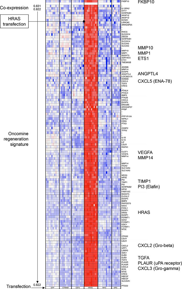 Cluster analysis of the Oncomine regeneration gene signature co-expressed with FKBP10 gene in transfected human epithelial cells.