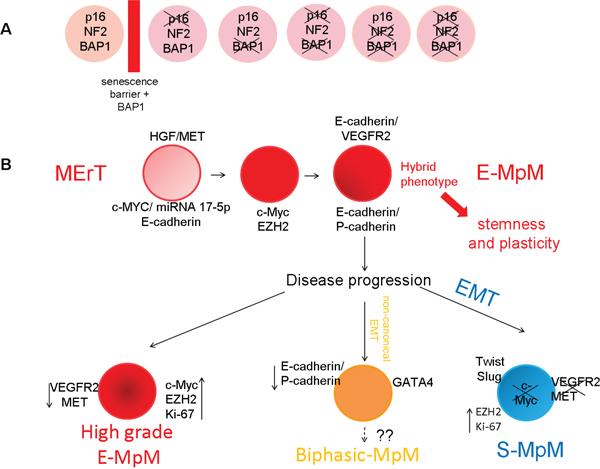 Proposed E-MpM model.