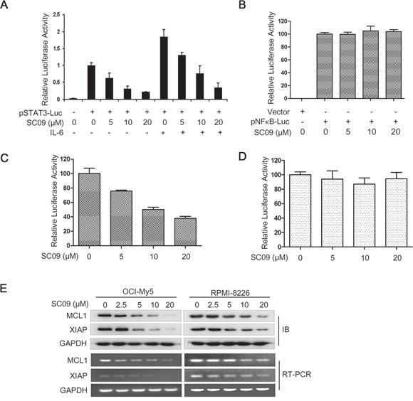 SC09 inhibits STAT3 transcriptional activity.