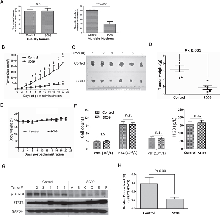 SC09 delays MM tumor growth with well tolerance in vivo.