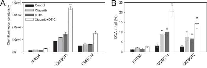 Olaparib and/or DTIC induced DSBs in melanoma cell lines (DMBC11, DMBC12).