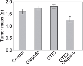 Combination of olaparib and DTIC reduced the growth of human melanoma in immunodeficient mice.