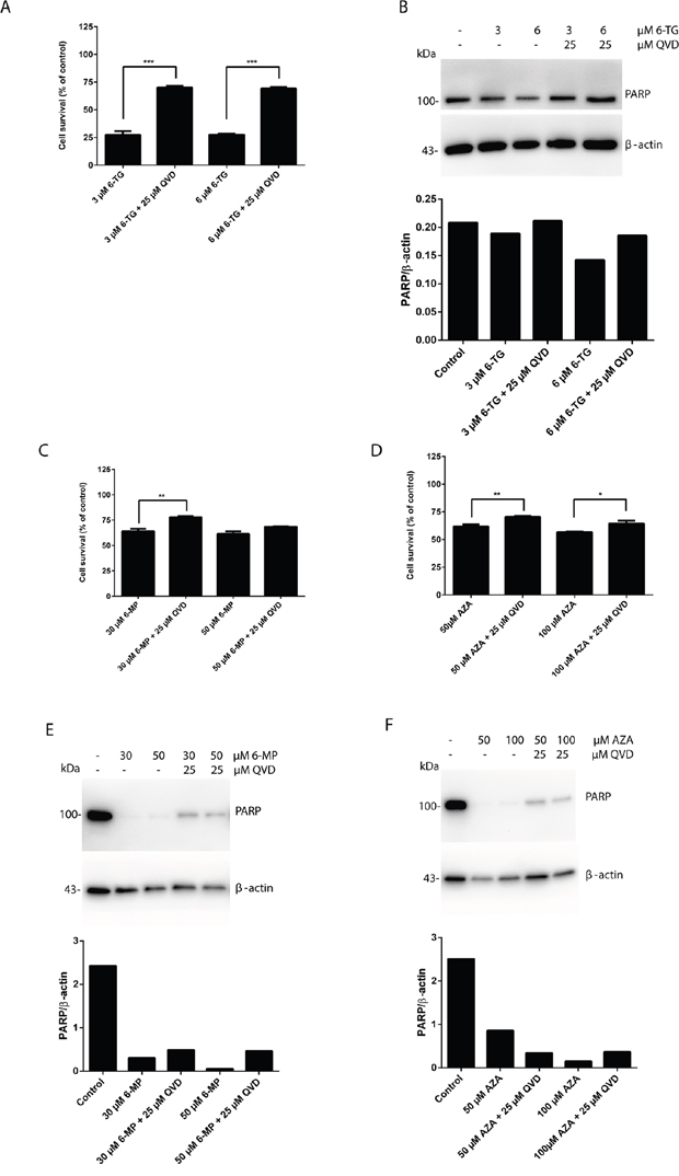 Apoptosis is the main pathway of cytotoxicity of thiopurines, which is caspase dependent.