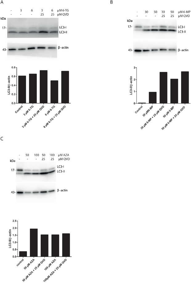 Apoptosis inhibition using QVD promotes autophagy induction in thiopurines treated cells.