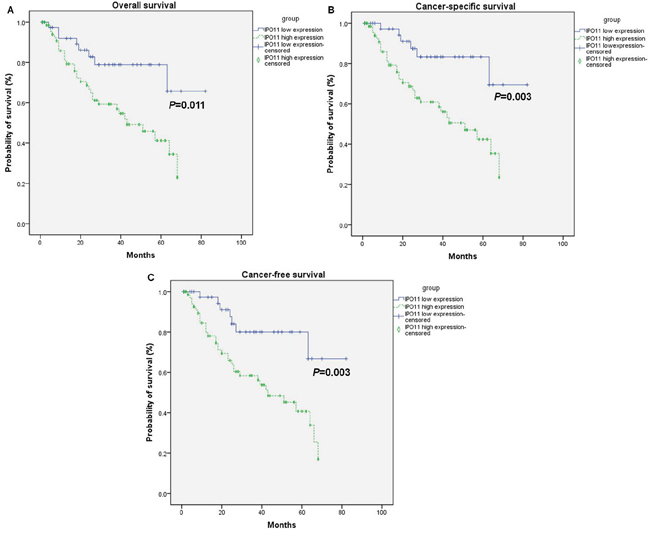 Overexpression of importin-11 predicts poor survival of BCa patients.